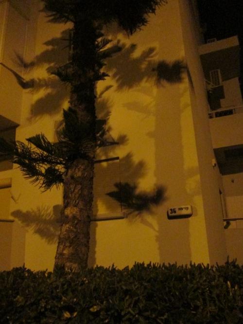 עץ בחשיכה
