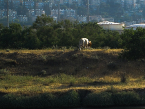 IMG_3414חיפה