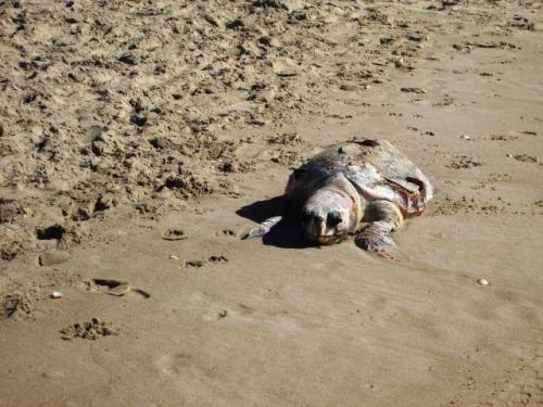 התוצאה בחוף